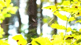 Spinne im Wald stock video