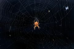 Spinne im wilden lizenzfreies stockbild