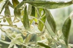 Spinne ist auf dem Gehen auf sein Netz lizenzfreie stockfotos