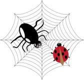 Spinne jagt auf dem Marienkäfer Stockfotos
