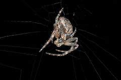 spinne Makro Stockbild