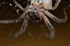 spinne Makro Stockbilder