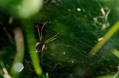 Spinne mit gelben Streifen im Netz Stockbild