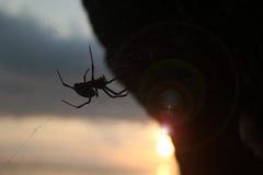 Spinne mit Sonnenlicht und Blendenfleck Stockfotos