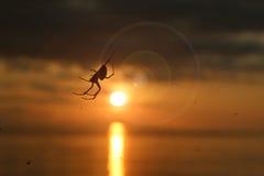 Spinne mit Sonnenlicht und Blendenfleck Lizenzfreies Stockfoto
