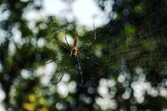 Spinne mit Web stockfoto