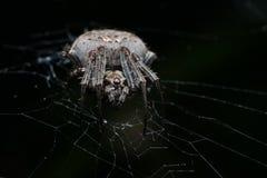 Spinne nachts Stockfoto