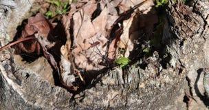 Spinne, Netz, schwarze Witwe, Stumpf, verrottete, Moos, Schmutz, Blätter, draußen Stockfotografie