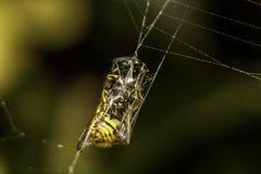 Spinne ` s Netz Lizenzfreies Stockbild