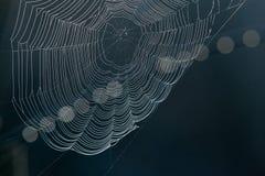 Spinne ` s Netz auf dunklem Hintergrund lizenzfreies stockbild
