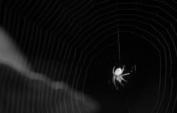 Spinne in Schwarzweiss Stockbild