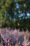 Spinne in seinem Spinnennetz Lizenzfreies Stockbild