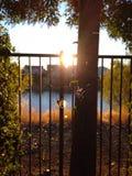 Spinne am Sonnenuntergang Stockfotos
