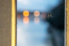 Spinne in Spidernet Lizenzfreies Stockfoto