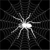 Spinne, spiderweb Stockfoto