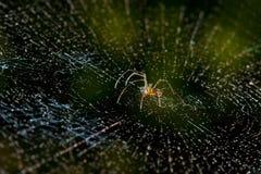 Spinne, Spinnennetz. Stockfotos