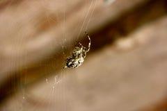Spinne spinnt ein Netz stockfotografie