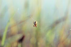 Spinne spinnt ein Netz an eines grünen Hintergrundes Stockfotografie