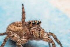 Spinne, springende Spinne auf Wand stockbilder