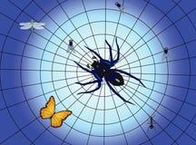 Spinne und Insekt im Web Lizenzfreies Stockbild