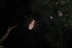 Spinne und Netz Artifitial Stockfoto