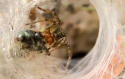 Spinne und Opfer stockfoto
