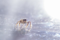 Spinne und Purpur stockfotos