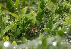 Spinne und Regen stockbild