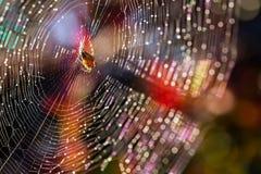 Spinne und Spinnennetz lizenzfreies stockfoto