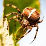 Spinne und Spinnennetz im Garten des Hauses lizenzfreie stockfotos