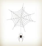 Spinne und Web lizenzfreie stockbilder
