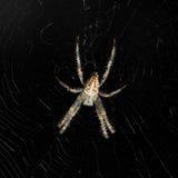 Spinne und Web lizenzfreies stockfoto