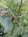 Spinne unter Nesselblatt in der sonnigen Wiese Lizenzfreies Stockfoto
