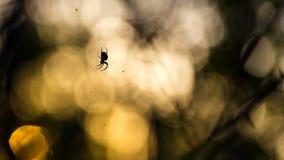 Spinne verbessert seine Masche Stockfoto