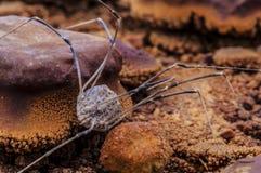 Spinne versteinert durch kalten Geysir Utah der Geysirwasser-Nahaufnahme stockfoto