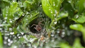 Spinne verteidigen sein Nest lizenzfreie stockfotos