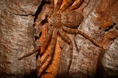 Spinne vor Frühstück stockbild
