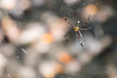 Spinne wartet auf Köder auf dem Netz Stockfotos