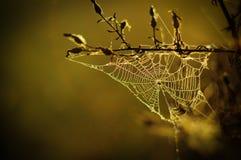 Spinne web2 Lizenzfreie Stockbilder