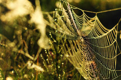 Spinne web3 Stockfoto