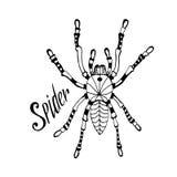 Spinne in zentangle Art Gezeichnete Gekritzelskizze des Vektors Hand für Tätowierung, Druck stock abbildung