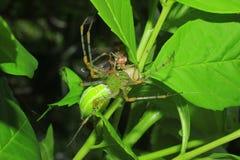 spinnen Stock Afbeeldingen