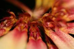 Spinnen-Blume mit vielen Farbe lizenzfreies stockbild