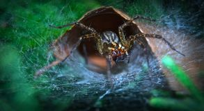 Spinnen-Höhle Lizenzfreies Stockfoto