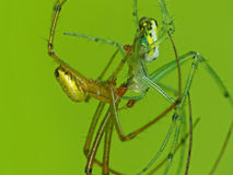 Spinnen het Kussen Stock Fotografie