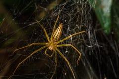 Spinnen in het nest stock foto's