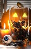 Spinnen im Glasbehälter für Halloween Stockfotos