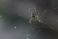 Spinnen-Mädchen stockbild