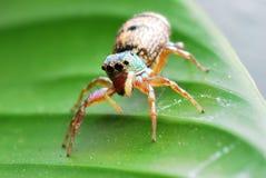 Spinnen-Makro Stockfoto