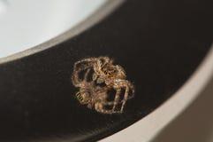 Spinnen-Nahaufnahme Stockbild